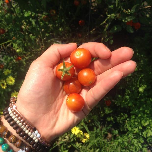 Tomatoes fresh off the vine!